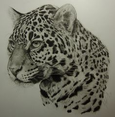 Jaguar by Dhekalia.deviantart.com on @deviantART A3 Pure White Melotex Paper Graphite 4H - 6B Mechanical Pencil and Traditional Pencils