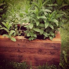 DIY scrap herb planter