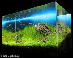 AGA Aquascaping Contest - Entry #82