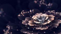 digital-art-cgi-fractal-flowers-fractal-lights-dark-2560x1440.png (2560×1440)