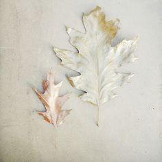 .@anastasia / stilzitat | Golden fall #abcfee c wie #copperlove #vsco #vscoism #vscocam #vsconature