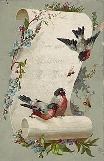 Postcard Accented with Birds Vintage Labels, Vintage Ephemera, Vintage Paper, Vintage Postcards, Images Vintage, Vintage Pictures, Vintage Prints, Decoupage Paper, Decoupage Vintage
