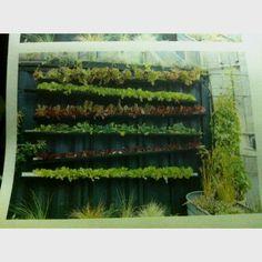 Vertical Gardening. Homesteading