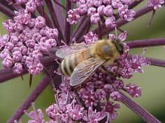 ::Visitor Bee::  Find a meeting location near you by visiting JW.org ༺♥2015♥༻