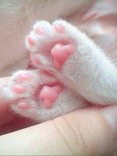 AWWW. Little pink squishy toes More Learn more at - Catsincare.com