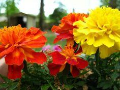 Yellow & Orange Flowers
