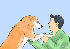How to train a Husky Pup