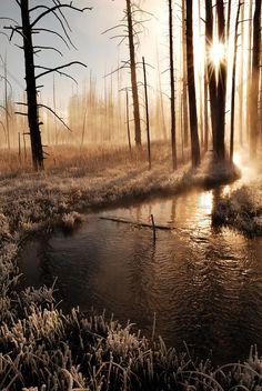 Frosty Yellowstone Morning - Decoration Murale & Papier Peint Photo - Photowall