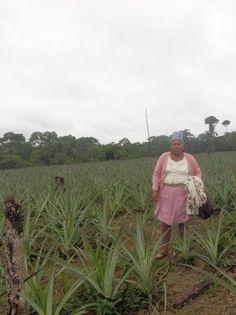Entre Rios, Bolivia / Pineapple Farm