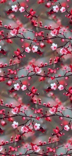 Tumblr Wallpaper, Floral Wallpaper Iphone, Flower Background Wallpaper, Cute Wallpaper Backgrounds, Colorful Wallpaper, Floral Wallpapers, Pink Flower Wallpaper, Cute Wallpapers For Iphone, Background Images
