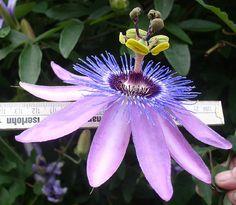 Perennials Http Www Onlinenurseryco Best Shade Pinterest And