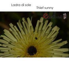 Happy weekend. Flower Sardinia. Shop online enedina.it Sardinia, Happy Weekend, Sea, Flower, Ocean, Floral, Flowers