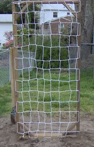 Homemade cucumber trellis - sturdy, inexpensive and can be used year after year. Uses clothes line (cotton line will rot - be sure to get nylon or baling twine to use for years)