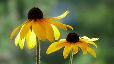 黄色の花、マクロ、ボケ 壁紙 - 1920x1080 フルHD