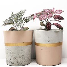 First day of spring. Thanks a lot for sharing this lovely photo wit… - House Plants Concrete Crafts, Concrete Art, Concrete Projects, Pot Jardin, Concrete Planters, Wall Planters, Succulent Planters, Succulents Garden, Painted Pots