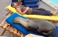 Em março, um leão-marinho foi fotografado dormindo à beira da piscina de hotel de Galápagos.  (Foto: Reprodução)