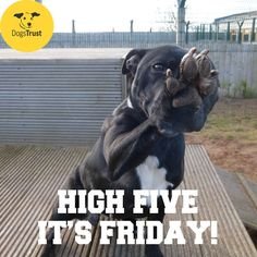 Happy Friday from Dogs Trust!