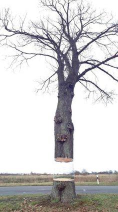 Der schwebende Baumstamm - optische Täuschung (© REX/Art-EFX)