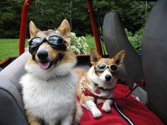 motorcycle goggles, | 108 Reasons Why Corgis Really Are That Great