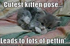Funny Memes For Kids Animals : Russian blue kittens cute things pinterest russian blue kitten