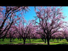 Vivaldi Spring (Full HD) Classical music