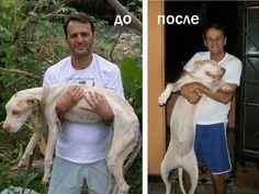 Исцеление от смерти — спасение умирающей собаки (потрясающее видео) Wilson Martins Coutinho | Короткие Истории Длинной Таксы Sports, Hs Sports, Sport
