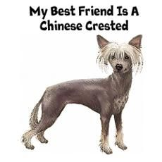 CHINESE CRESTED PAINTINGS | Chinese Crested Wall Art Poster