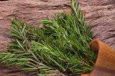 rosemary herbs and medicinal herbs organic healing herbs fresh bunch