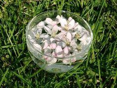 Herstellung der Bachblüten