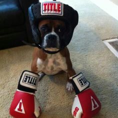Boxing boxer. (Yay! Title Boxing gloves!)