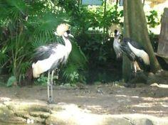 Bali Bird Park - Gianyar - Reviews of Bali Bird Park - TripAdvisor