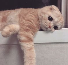 Discovered by 𝑀𝒶𝓂𝒾 𝒬𝓊𝑒𝑒𝓃. Find images and videos about cute, cat and cute cuteness on We Heart It - the app to get lost in what you love. Cute Cat Memes, Funny Cute Cats, Cute Baby Cats, Cute Little Animals, Cute Cats And Kittens, Cute Funny Animals, I Love Cats, Kittens Cutest, Sad Cat