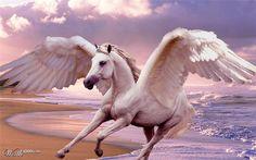 Gorgeous white pegasus