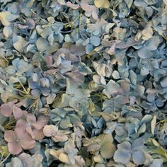 Rose Quartz and Serenity: The Pantone Colors of the Year for 2016!  | Flyboy Naturals Rose Petals www.flyboynaturals.com