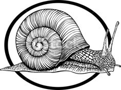 Snail Royalty Free Stock Vector Art Illustration