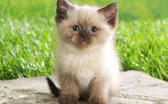 Google Image Result for http://images4.fanpop.com/image/photos/16100000/Cute-Kitten-kittens-16122057-1280-800.jpg