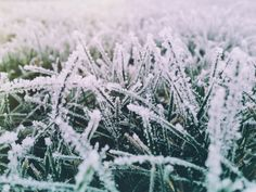 The Cold Green Grass by Demi Kwant on 500px