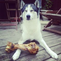 Happy with his bone!