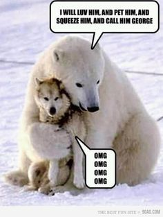 hahahahaaha animal pictures, cartoon quotes, polar bears, pet, funni, bear hugs, dog, friend, bugs bunny