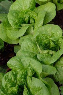 Good article on organic farming