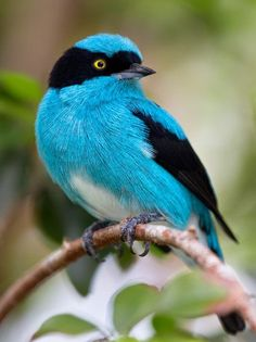 Beautiful White, Blue and Black Bird