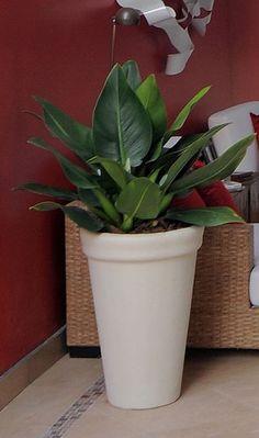 Plantas para ambientes fechados | Estação das Flores