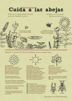 Infografía - Cuida a las Abejas | Víctor Paiam