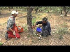 Γιάννης Αργυρός Σαντορίνη: Πως Μπολιάζω! Μπόλιασμα καρποφόρων δέντρων... Cowboy Hats, Blog, Gardening, Youtube, Western Hats, Lawn And Garden, Blogging, Youtubers, Youtube Movies