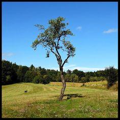 My mum's dog photobombing my picture :) . . #tree #meadow #forest #dog #czech #hike #dogwalk #czechrepublic #igerscz #hiking #hikingadventures #hikingtrails #nature #naturelovers #outdoors #outdoorlife #wilderness #landscape #landscapes #landscapelovers #view #scenery #travel #traveling #travelgram #gaytravel #wanderlust #adventure #explore #discover