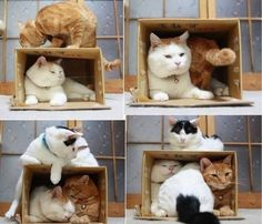Many cats squeezing into a box