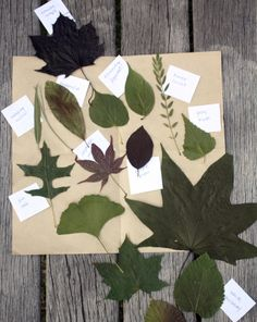 Science Fair: Shapes of Leaves