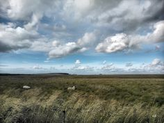 Twa Sheep  - - - #scotland #landscape #nature #clouds #sky #wildlife