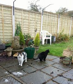 1000 Images About Cat Proof Gardens Fencing Containment