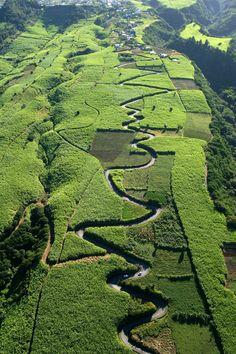 La Réunion - Route sinueuse dans les champs de cannes - Pour filmer ces paysages, nous aurons besoin du drone ... et donc de dépasser l'objectif initial de la coprod ... c'est pour la phase 2 http://www.touscoprod.com/reunion